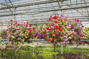 fleurs aux pétales de couleurs assorties photo