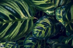 fond de feuillage vert tropical foncé photo