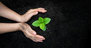 mains arrosage des plantes photo