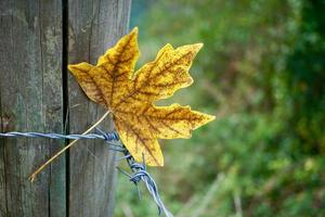 feuilles jaunes en automne photo
