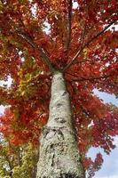 arbres à feuilles brunes en automne photo