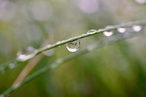 gouttes de pluie sur les plantes les jours de pluie photo