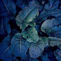 plante bleue et verte laisse fond bleu photo