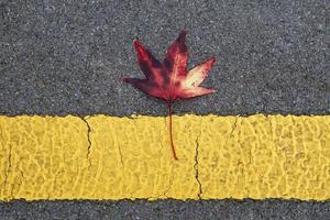 feuilles d'érable rouge en automne photo