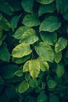 plante verte laisse dans la nature fond vert photo