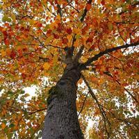 arbre aux feuilles rouges et brunes en automne photo