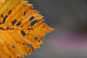 Feuille d'automne jaune sur fond d'automne sur un arrière-plan flou photo