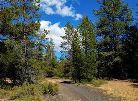 Pins en été une scène de forêt de juillet au terrain de camping Swamp Wells près de bend ou photo