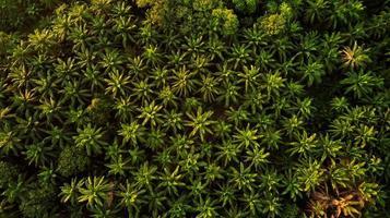 photographie aérienne des arbres photo