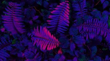 feuilles tropicales brillantes photo
