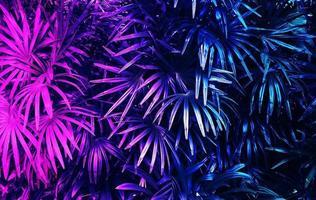 forêt de feuilles tropicales qui brille dans le fond sombre photo