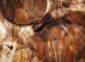 Résumé détail sur les troncs d'arbres sciés photo