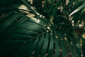 Feuille verte tropicale floue dans un ton sombre photo