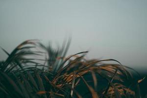 fond de feuille verte tropicale floue photo