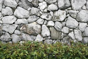 ancienne paroi rocheuse avec plante verte photo