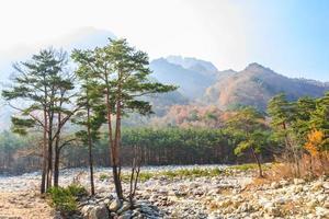 Arbres colorés au parc national de Seoraksan en corée d'automne photo