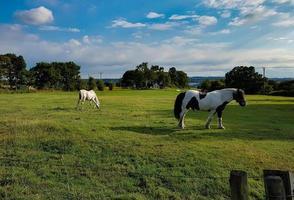cheval dans le champ photo