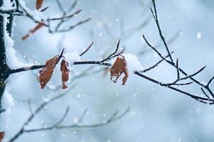 neige sur les plantes en hiver photo