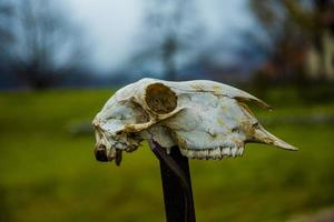 crâne de la façon dont on photo