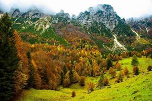 feuillage et montagnes trois photo