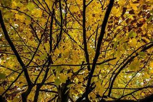 toit de feuilles jaunes photo