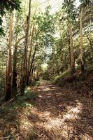 chemin de randonnée au milieu de la forêt photo