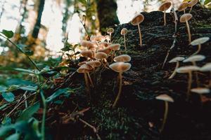 bouquet de champignons dans la forêt photo
