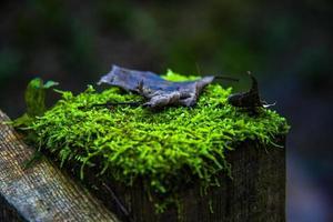 mousse à l'automne sous-bois deux photo
