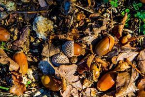 glands d'automne zéro photo