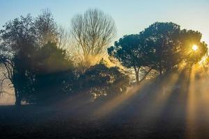 soleil brouillard et arbres un photo