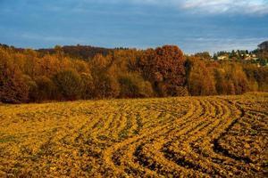 champs labourés et arbres d'automne photo
