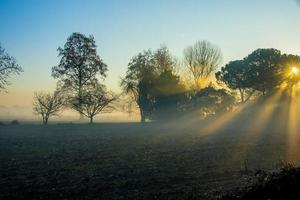 soleil brouillard et arbres photo