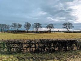 arbres sur le paysage photo