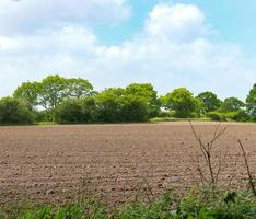 champ de fermiers et arbres photo