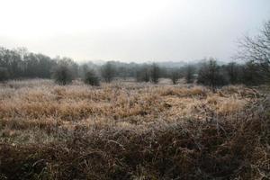 champs d'hiver et ciel gris photo
