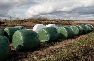 sacs d'alimentation verts photo