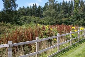 clôture et buissons photo