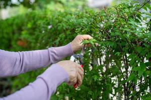 Senior asiatique ou vieille dame âgée femme couper les branches avec un sécateur pour prendre soin de jardin dans la maison passe-temps pour se détendre et faire de l'exercice avec heureux photo