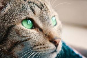 chat tigré se bouchent photo