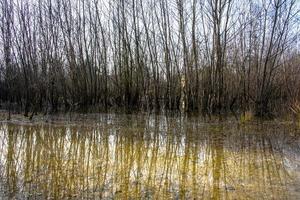 marais d'hiver zéro photo