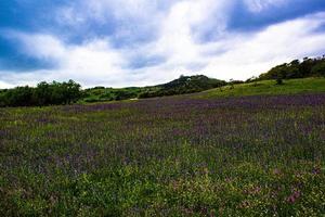 Prairie fleurie dans les collines espagnoles photo