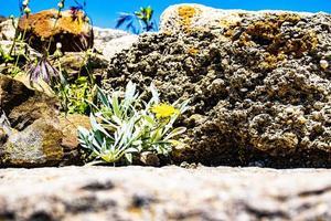 fleur et rocher photo