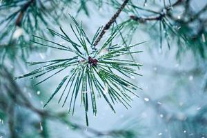 neige sur les plats en hiver photo