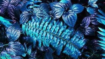 feuille bleue tropicale lueur dans le fond sombre photo
