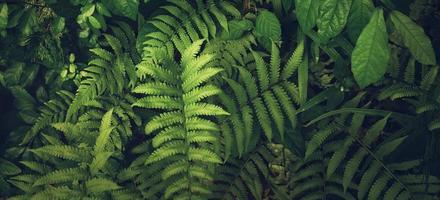 feuille verte tropicale photo