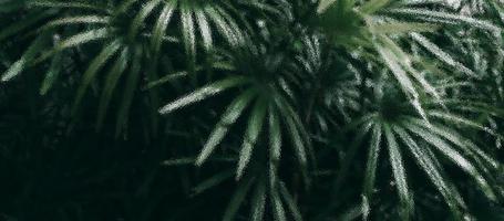 Une vue floue du jardin vert vu à travers un verre dépoli ton sombre photo