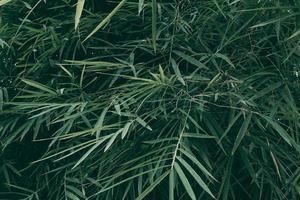 thème de ton sombre de fond de feuille verte tropicale photo
