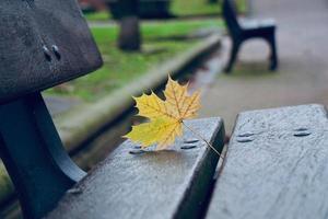 feuille jaune sur le banc en saison d'automne photo