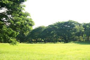 grands arbres dans le jardin photo