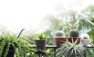 concept de maison et jardin de décoration d'arbres et de plantes au balcon avec espace de copie photo